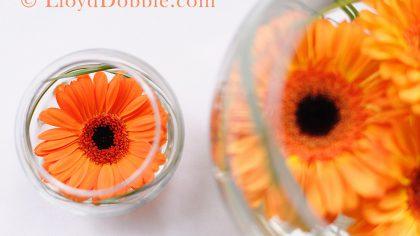 Copyright image of sunflowers