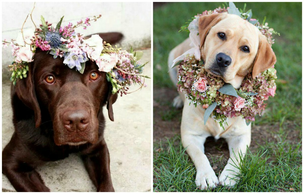Floral Crowns For Your Dog