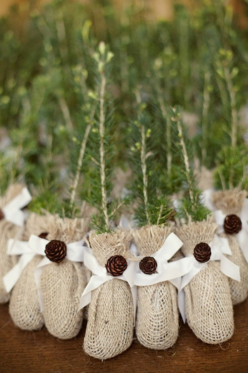 blogs-aisle-say-evergreen-saplings-wedding-favor