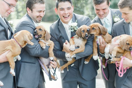 Images shows five men in wedding suits laughing each holding a brown puppy